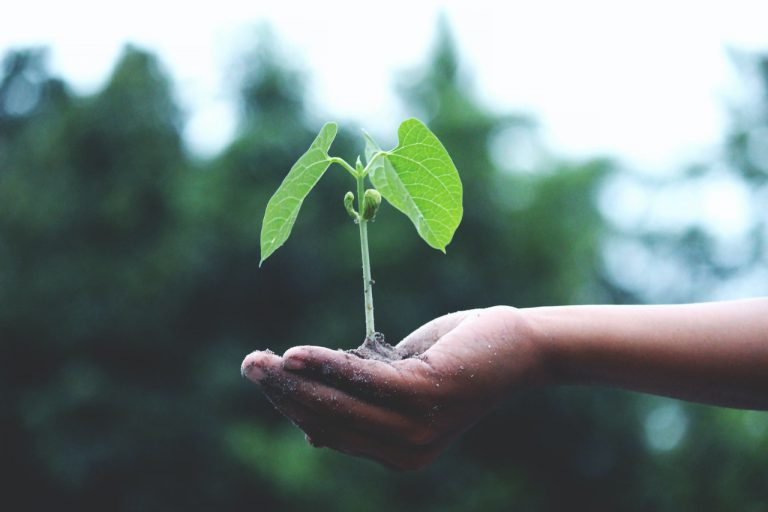 A person holding a plant in their hand